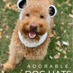 dog in hat with panda bear ears and title adorabe dog hats, photo