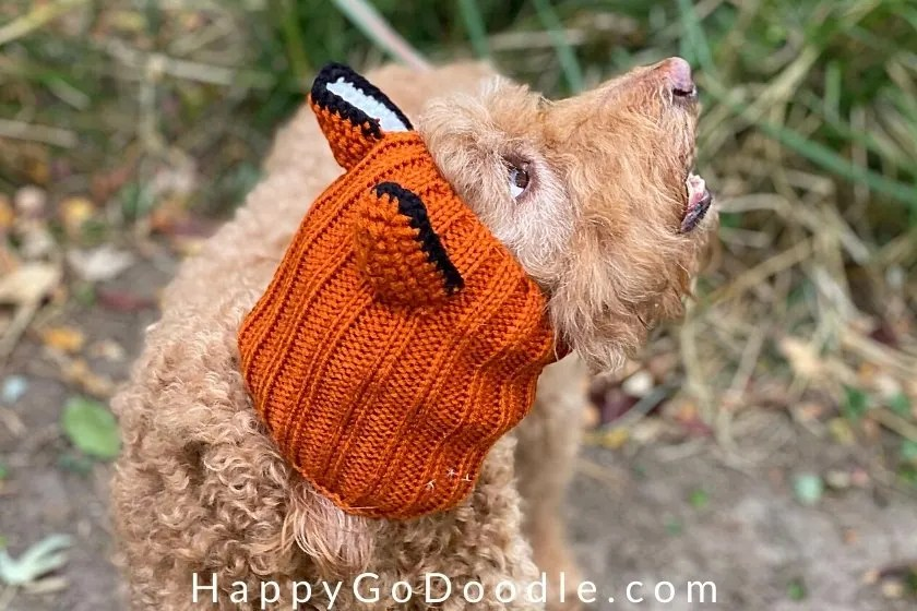 Side view of a fox-themed Zoo Snood worn by an apricot Goldendoodle, photo