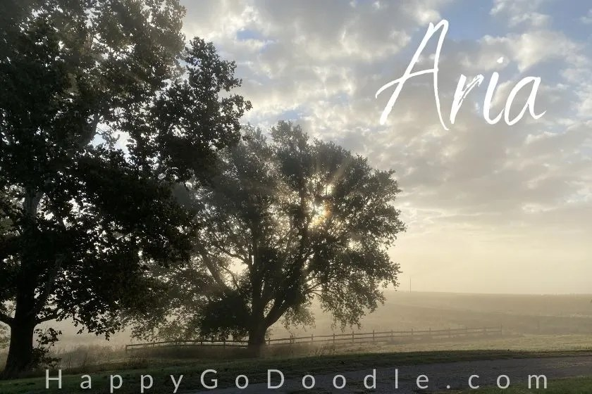 """two beautiful trees on a foggy morning in the country and the word """"Aria"""" which means Air, as a nature dog name, photo"""