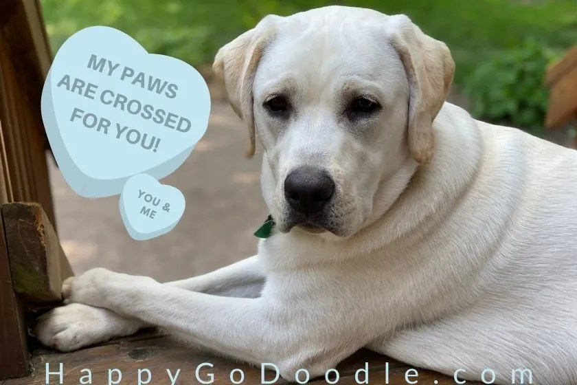 Dog with paws crossed and message says, my paws are crossed for you, photo