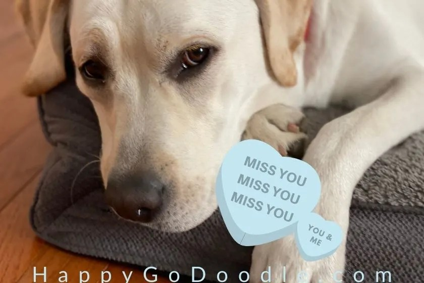 photo of dog looking sad and message says miss you, photo