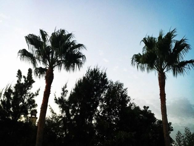 Palmen in der Dämmerung by happyhomeblog.de