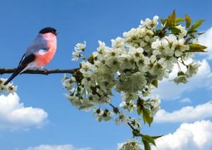 spring-641994_1280