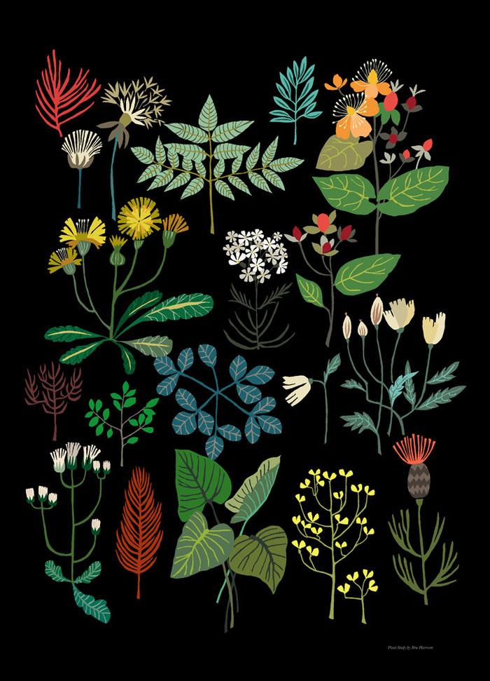 brie-harrison-plantstudy