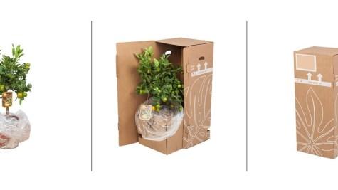 online planten kopen bij de kweker verpakking
