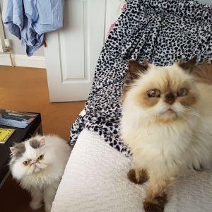 Cat Sitters Gosforth