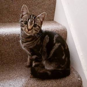 Recommended cat sitter Newcastle