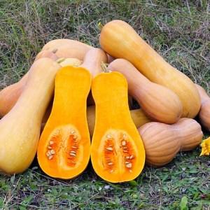 Pumpkin and Squash