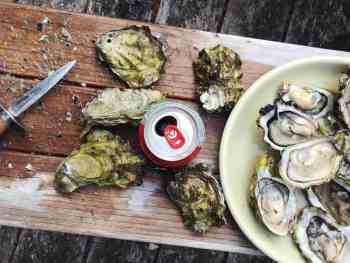 Raw oysters, Apalachicola Bay oysters, oysters on the half shell