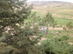 Dan Cribby tends to his trees at his home