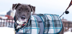 pet-care_cold-weather-tips_main-image