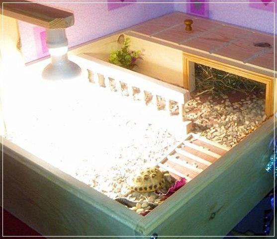 Tortoise tables custom made in the uk for happy tortoises