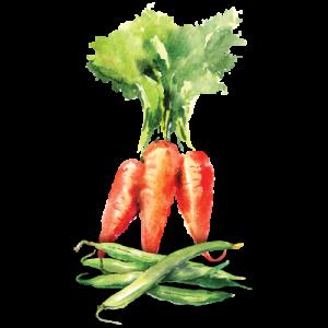 garden vegetable illustration