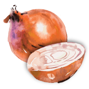 onion illustration
