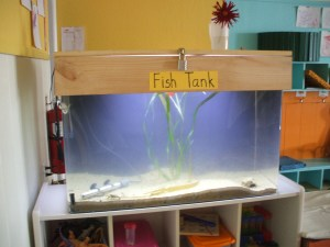 Our lovely fish tank!