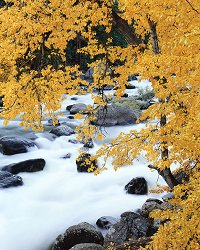 Leaves Over Rushing River