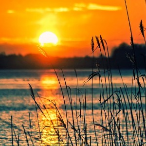 Beautiful yellow and orange sunset over a lake with reeds in the foreground