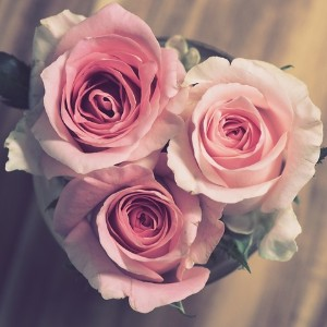 Three pastel pink roses in a cluster to form a bouquet in the shape of a heart