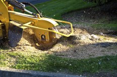 The Many Benefits of Stump Grinding