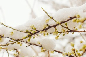 4 Helpful Tips for Winter Tree Care