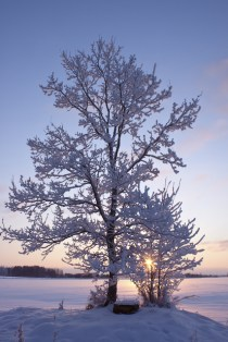 Why Winter Tree Pruning Is Beneficial For Your Property