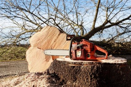 Signs that Indicate That Tree Pruning is Necessary