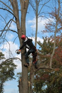 What a Certified Arborist Brings to the Table for a Tree Removal Project