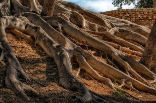 The Most Common Questions Asked About Tree Roots