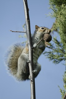 How Animals Can Damage Your Trees in the Winter
