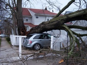How to Tell if Your Tree is Stressed
