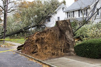 Can Homeowners Insurance Cover Potential Tree Damage?