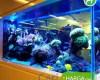 Harga Aquarium Besar