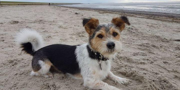 Wethouder bindt in: lastenverlichting voor hondenbezitters