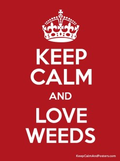 Love your weeds.