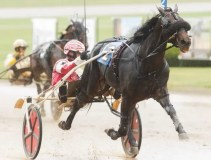 Mike's Z Tam (Patrick Lachance) won the first of two Tattersalls divisions | Dave Landry