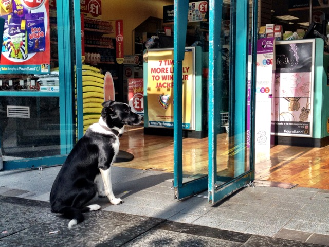 dog patiently waits for its owner