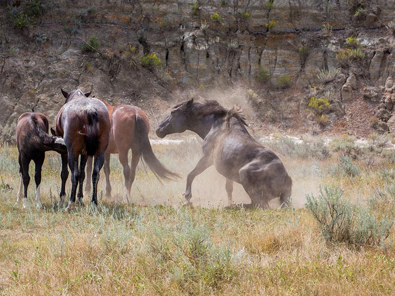 horses-20150827-_all5233-copy