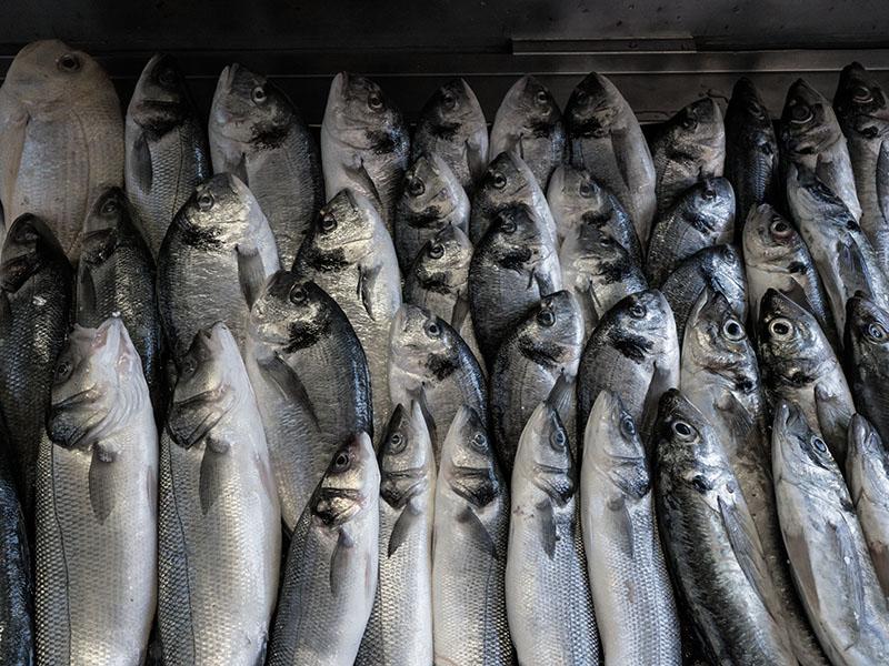 Fish Heads Fish Heads