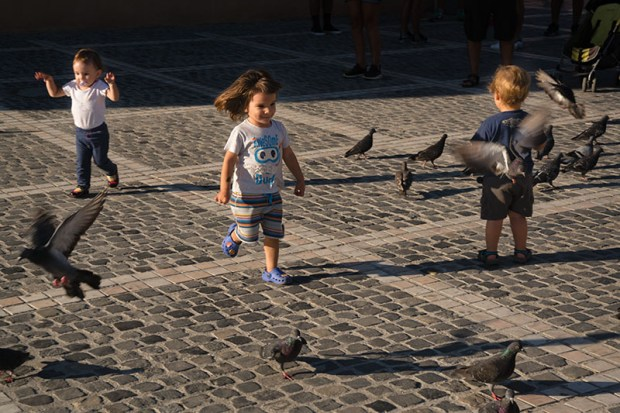 Brasov Kids and Pigeons