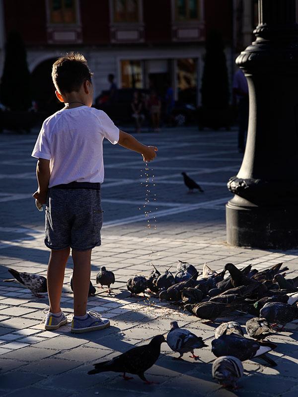 Brosov Feeding the Pigeons