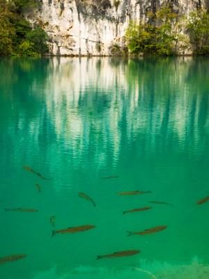 Plitvice Fish