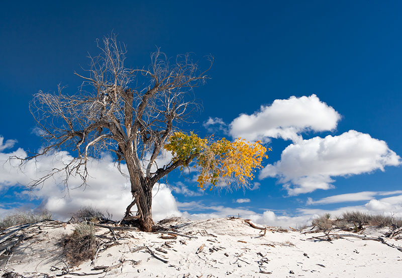 White Sands Fall
