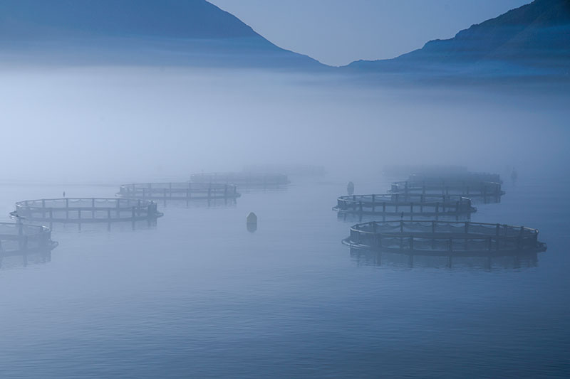 Fish Farms in the Bay of Kotor