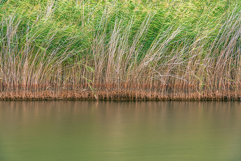 Reeds in the Outback