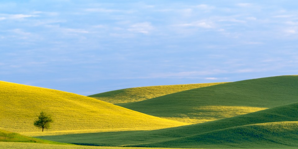 Lighted Landscape