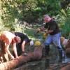 Day 1 of the Harper Creek shoreline project