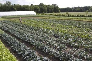 small farms 7