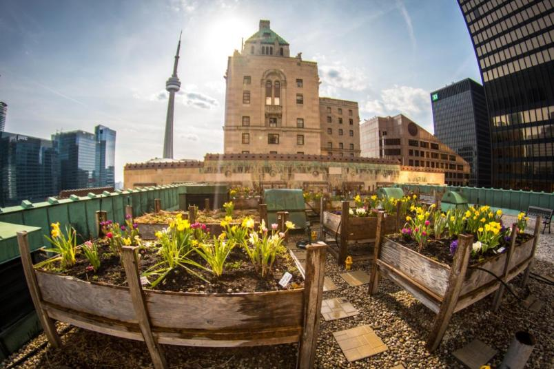 The rooftop garden at the Fairmont Royal York Hotel in Toronto.