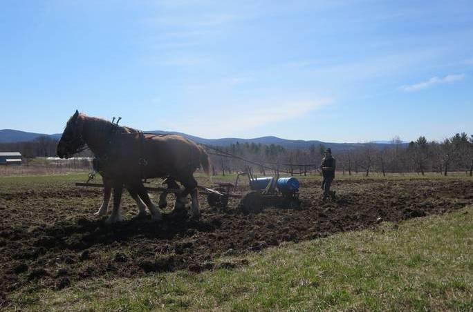 horses pulling a plow