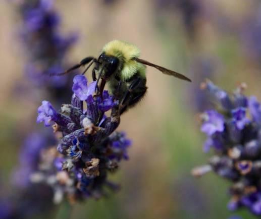 Lavender Farm 24